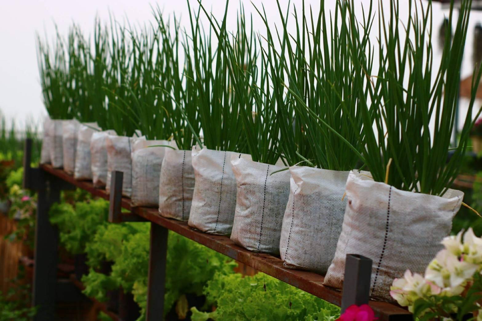 Smart Farming Grow Bag